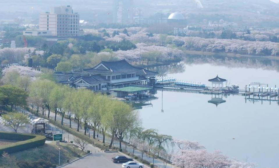 Gyeongju-cherry-blossoms