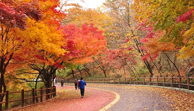 [Wanderlust Wednesday] Korea's Autumn is something you shouldn't be missing