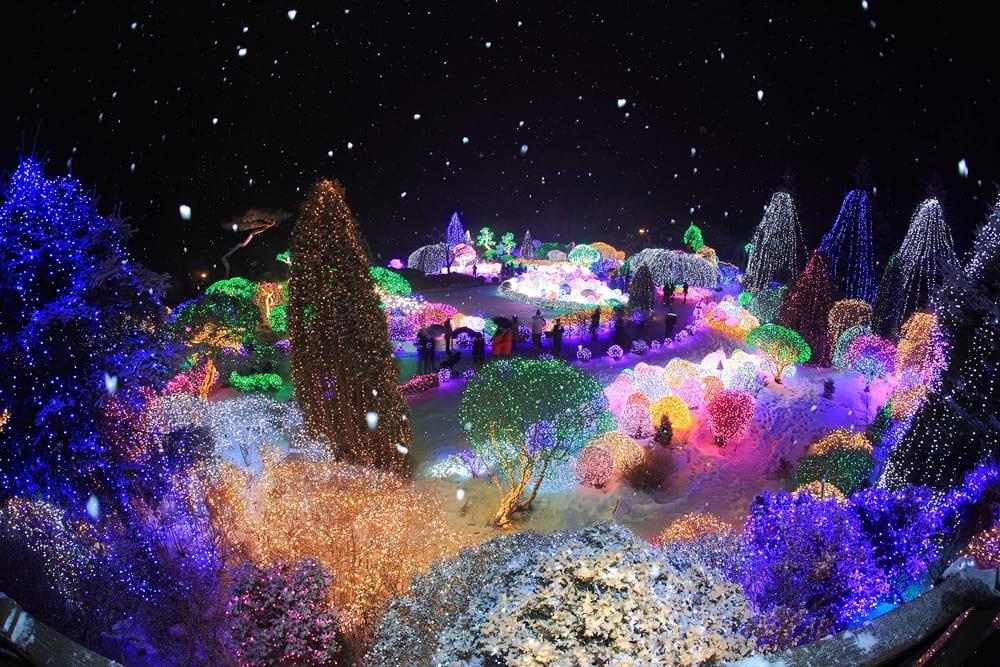 Light Festival (1)