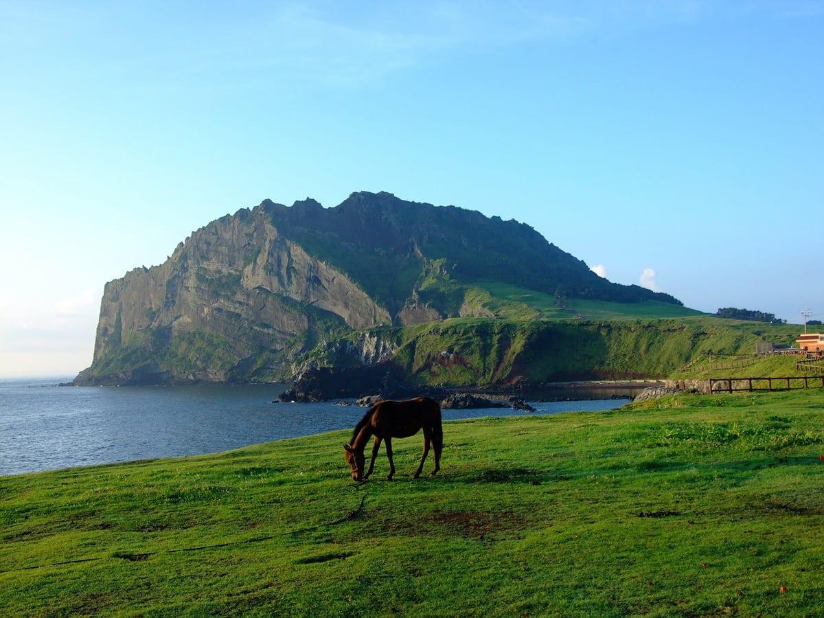 Jeju Island (1)