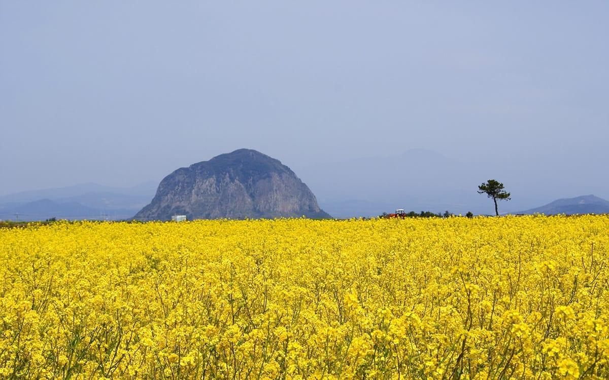 Jeju Island (3)