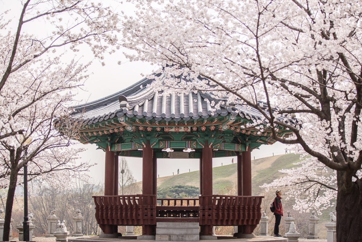 [Wanderlust Wednesday] Blooms and Blossoms in South Korea 2016… What is your choice?