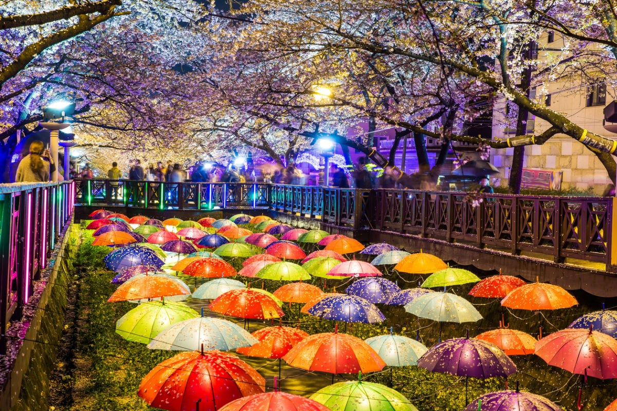 Cherry blossom in Jinhae, Korea.
