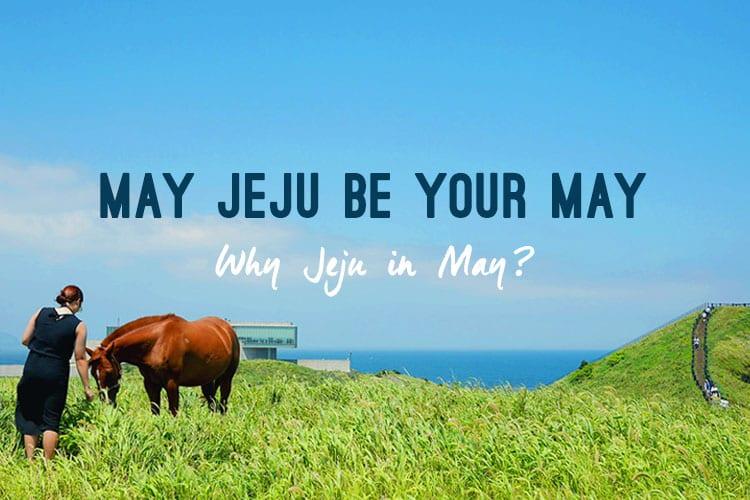Jeju May Campaign (1)