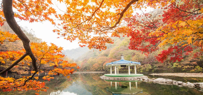 Fall-Leaves-1.jpg