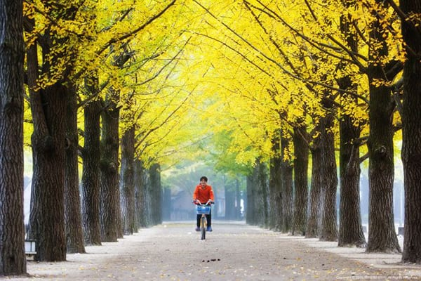 [Wanderlust Wednesday] 5 K-Drama Spots That Are Worth Traveling For This Autumn!