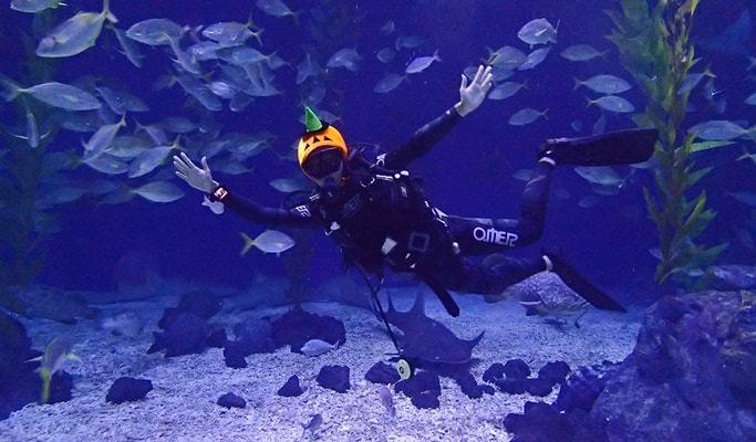 scuba diving in jeju