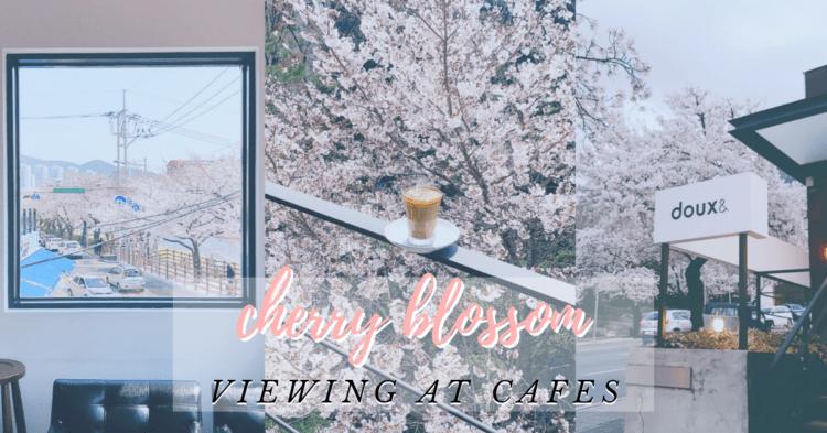 Catch some cherry blossoms as you café hop