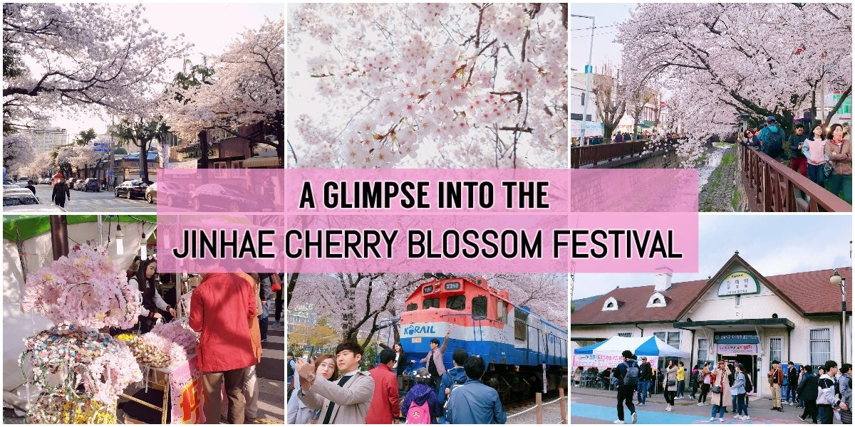 [TRAZY] A Glimpse into Jinhae Cherry Blossom Festival 2019