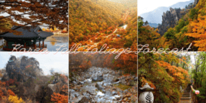 korea fall foliage forecast